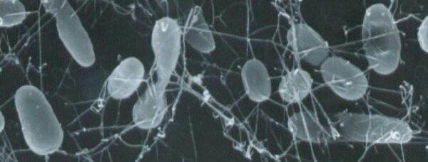 Her er der flest bakterier i hjemmet